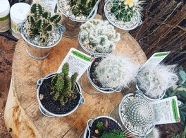 Crazy about Cacti